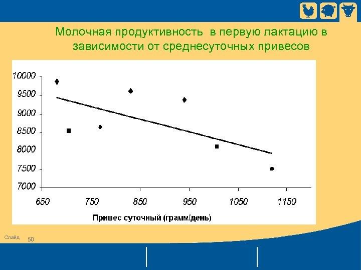 Молочная продуктивность в первую лактацию в зависимости от среднесуточных привесов Слайд 50