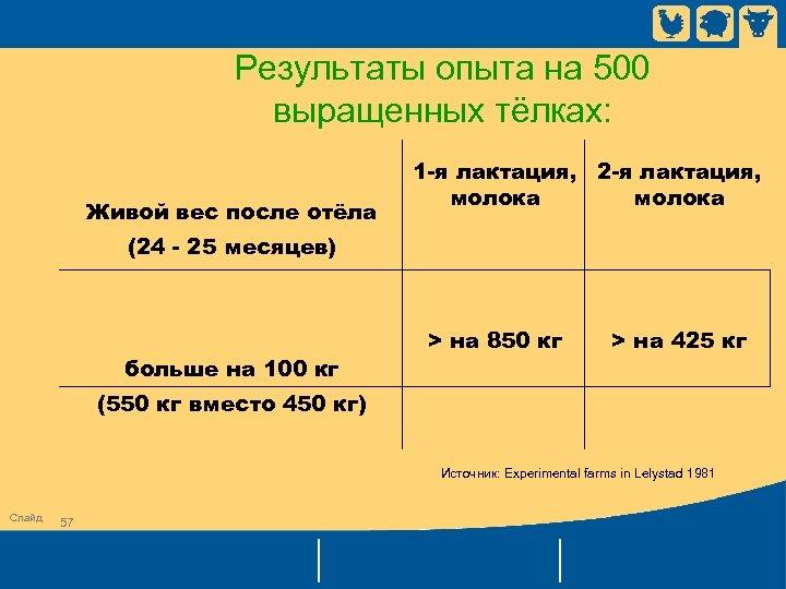 Результаты опыта на 500 выращенных тёлках: Живой вес после отёла (24 - 25 месяцев)