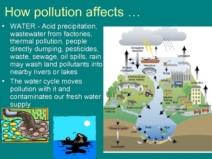 How pollution affects … • WATER - Acid precipitation, wastewater from factories, thermal pollution,