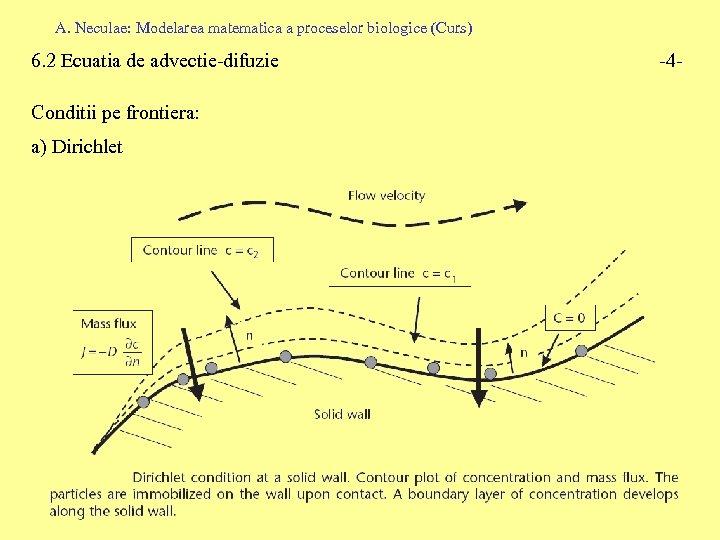 A. Neculae: Modelarea matematica a proceselor biologice (Curs) 6. 2 Ecuatia de advectie-difuzie Conditii