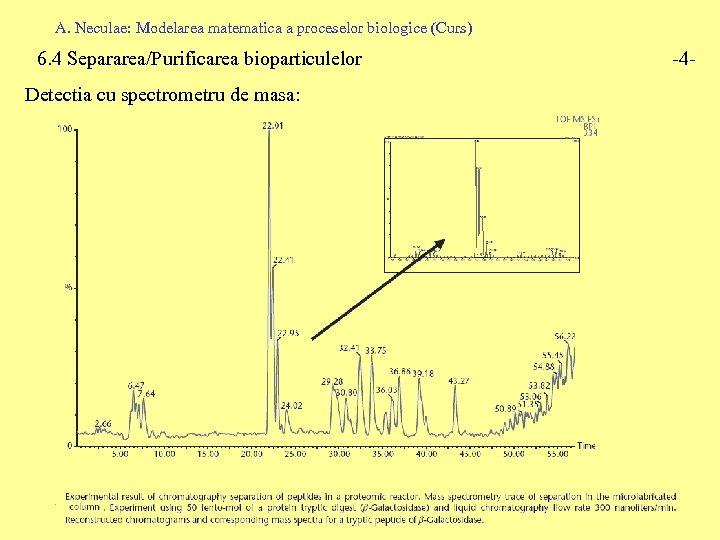 A. Neculae: Modelarea matematica a proceselor biologice (Curs) 6. 4 Separarea/Purificarea bioparticulelor Detectia cu