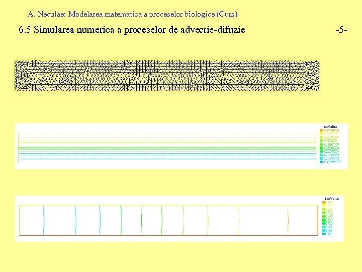 A. Neculae: Modelarea matematica a proceselor biologice (Curs) 6. 5 Simularea numerica a proceselor