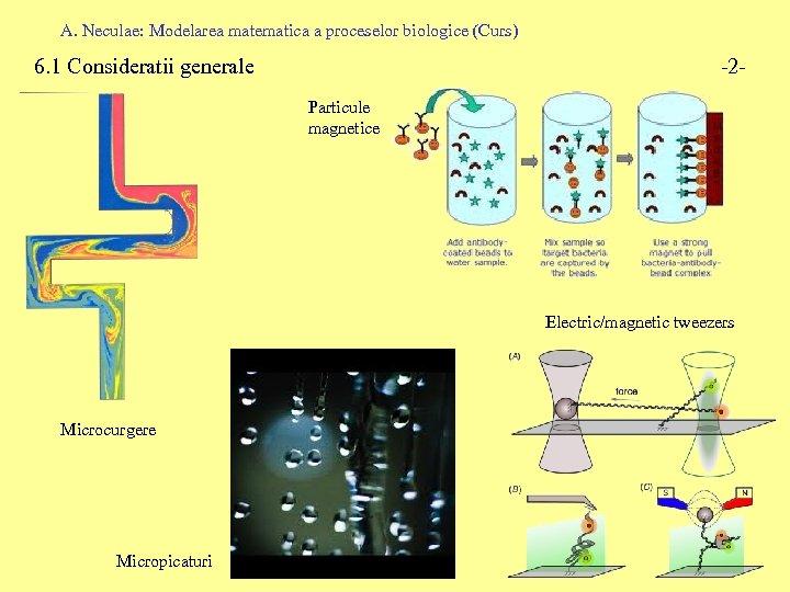 A. Neculae: Modelarea matematica a proceselor biologice (Curs) 6. 1 Consideratii generale -2 Particule