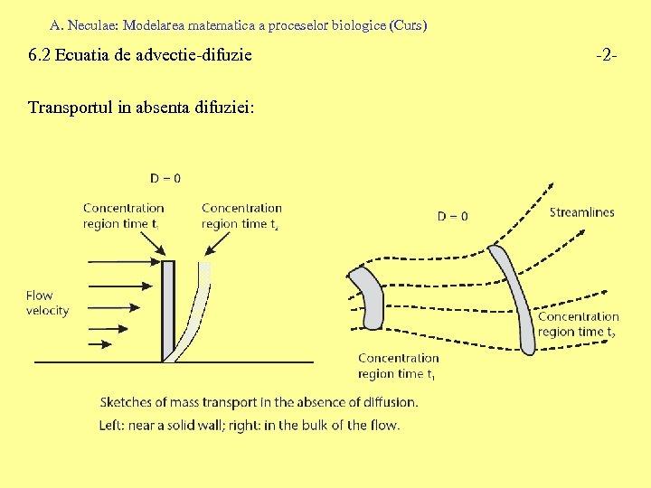 A. Neculae: Modelarea matematica a proceselor biologice (Curs) 6. 2 Ecuatia de advectie-difuzie Transportul