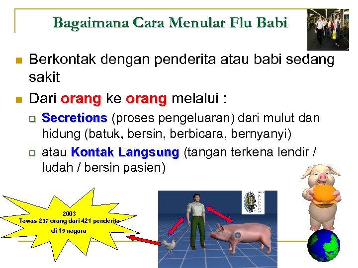Bagaimana Cara Menular Flu Babi n n Berkontak dengan penderita atau babi sedang sakit