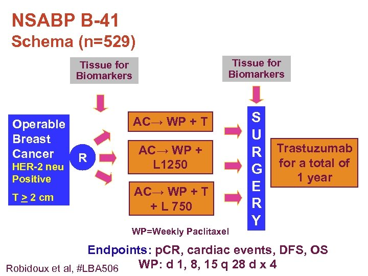 NSABP B-41 Schema (n=529) Tissue for Biomarkers Operable Breast Cancer R HER-2 neu Positive