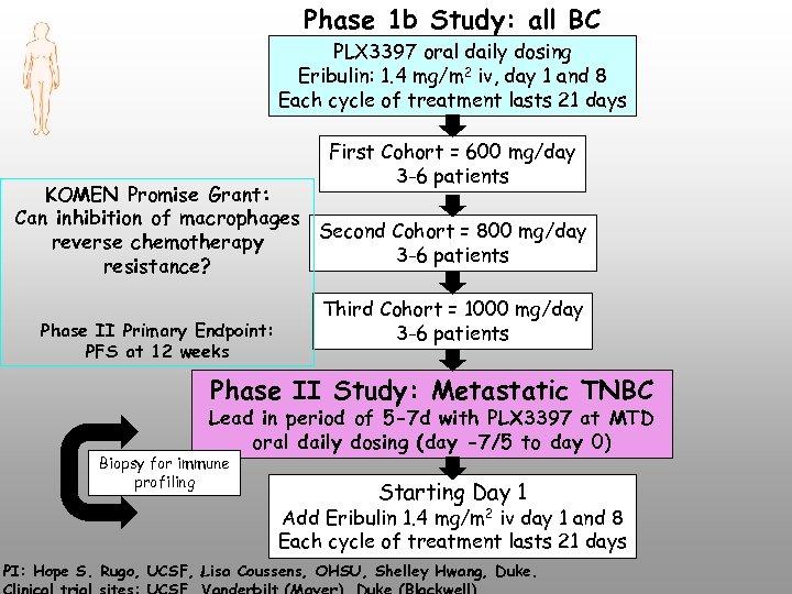 Phase 1 b Study: all BC PLX 3397 oral daily dosing Eribulin: 1. 4