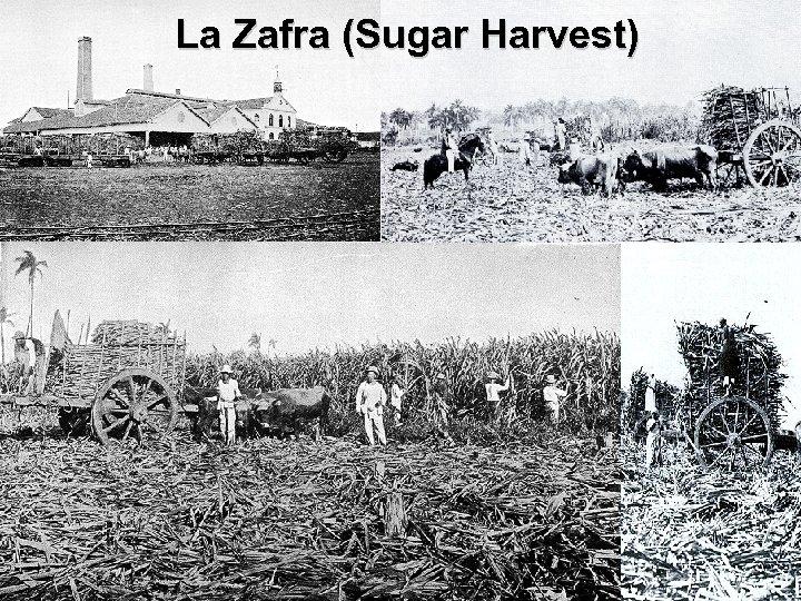 La Zafra (Sugar Harvest)