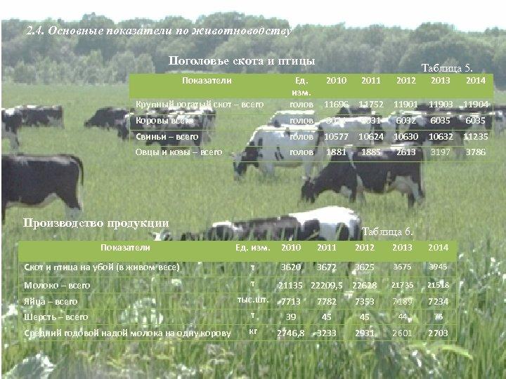 2. 4. Основные показатели по животноводству Поголовье скота и птицы Показатели Таблица 5. 2010