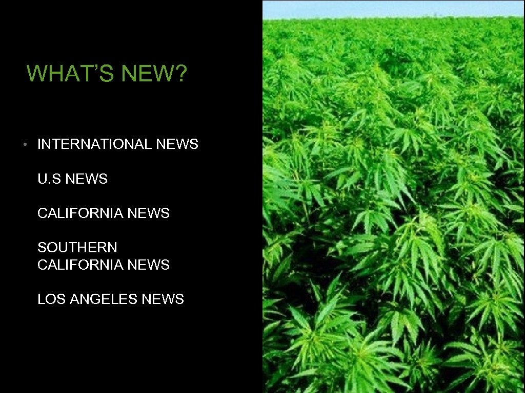 WHAT'S NEW? • INTERNATIONAL NEWS U. S NEWS CALIFORNIA NEWS SOUTHERN CALIFORNIA NEWS LOS