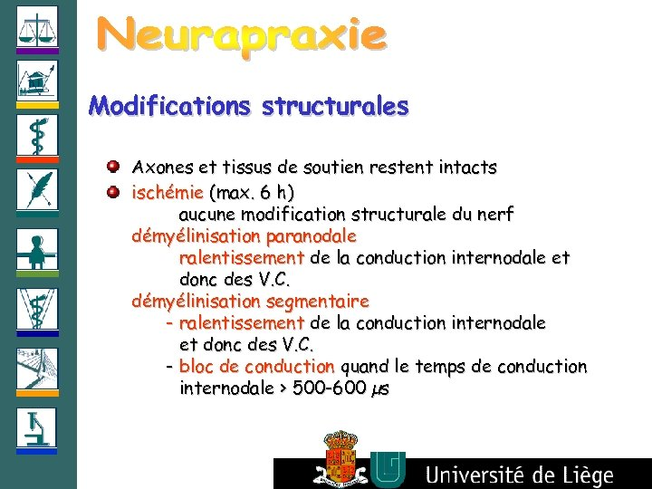Modifications structurales Axones et tissus de soutien restent intacts ischémie (max. 6 h) aucune