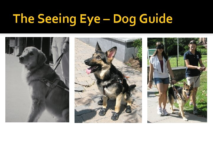 The Seeing Eye – Dog Guide