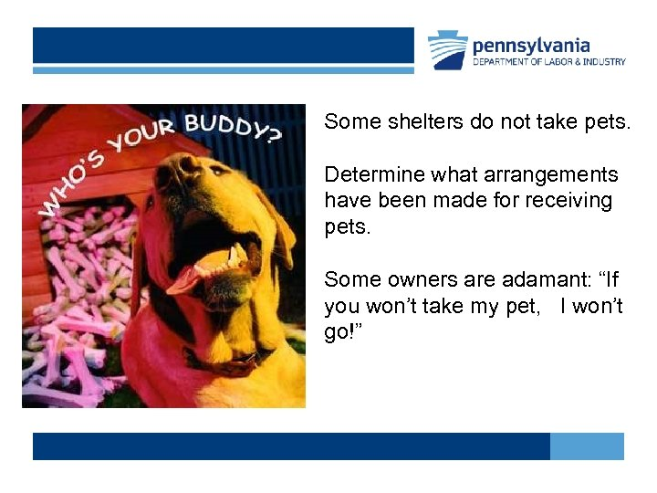 Some shelters do not take pets. Determine what arrangements have been made for receiving
