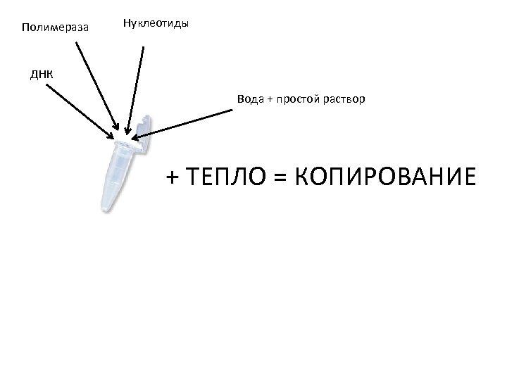 Полимераза Нуклеотиды ДНК Вода + простой раствор + ТЕПЛО = КОПИРОВАНИЕ