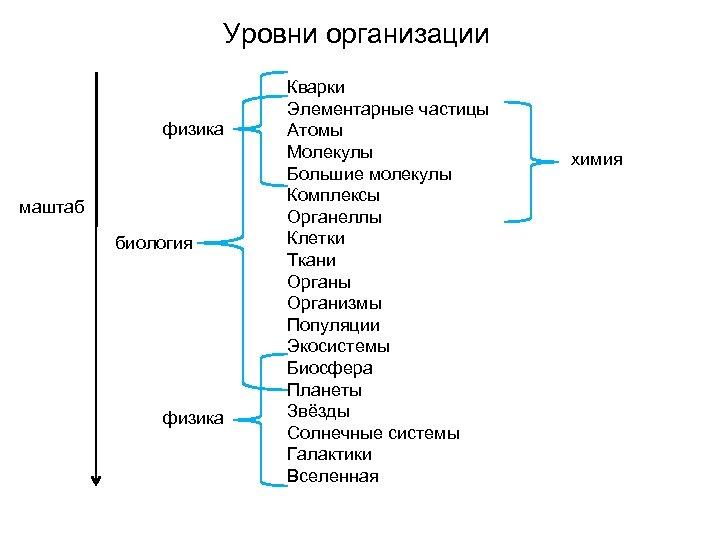 Уровни организации физика маштаб биология физика Кварки Элементарные частицы Атомы Молекулы Большие молекулы Комплексы