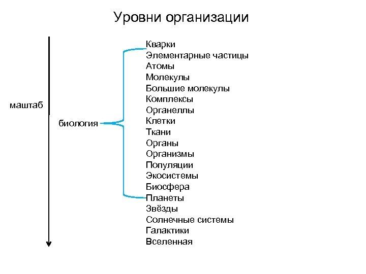 Уровни организации маштаб биология Кварки Элементарные частицы Атомы Молекулы Большие молекулы Комплексы Органеллы Клетки
