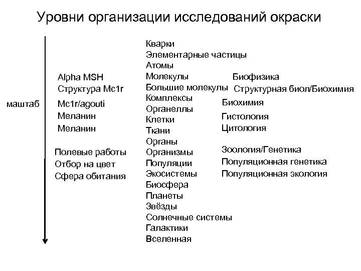 Уровни организации исследований окраски Alpha MSH Структура Mc 1 r маштаб Mc 1 r/agouti