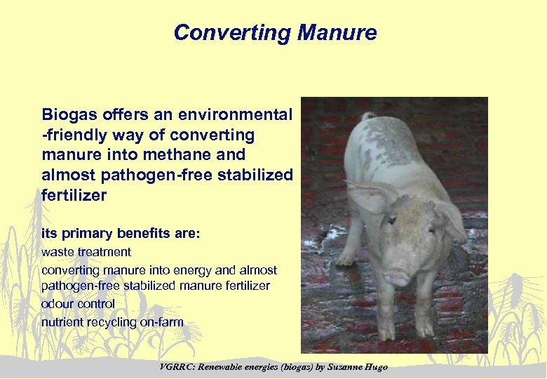 Converting Manure Biogas offers an environmental -friendly way of converting manure into methane and