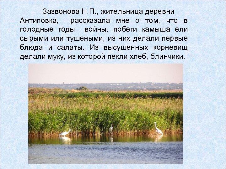 Зазвонова Н. П. , жительница деревни Антиповка, рассказала мне о том, что в голодные