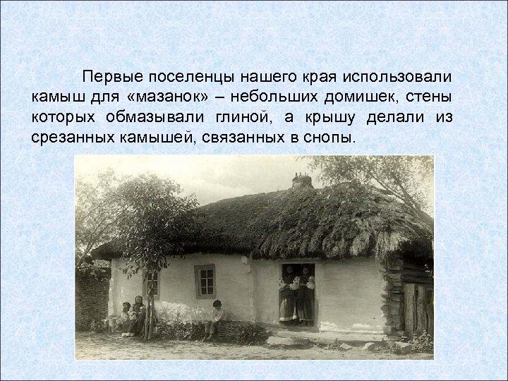 Первые поселенцы нашего края использовали камыш для «мазанок» – небольших домишек, стены которых обмазывали