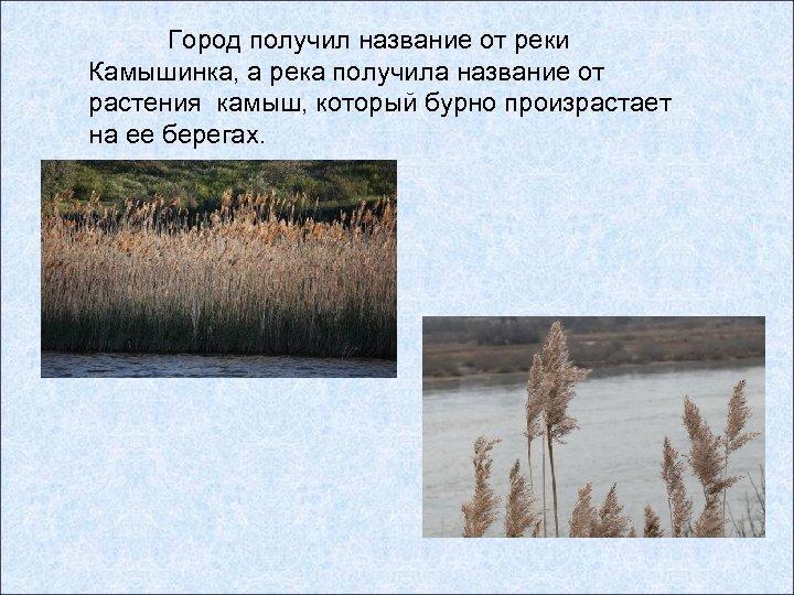 Город получил название от реки Камышинка, а река получила название от растения камыш, который