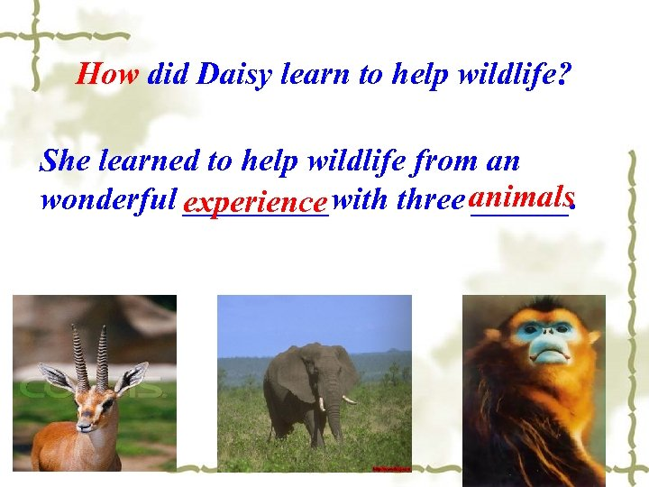 How did Daisy learn to help wildlife? She learned to help wildlife from an