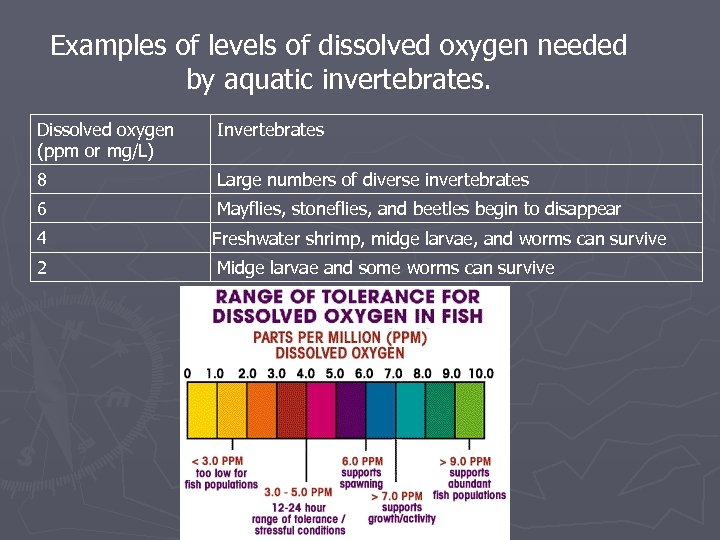 Examples of levels of dissolved oxygen needed by aquatic invertebrates. Dissolved oxygen (ppm or