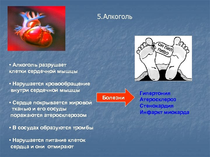 5. Алкоголь • Алкоголь разрушает клетки сердечной мышцы • Нарушается кровообращение внутри сердечной мышцы
