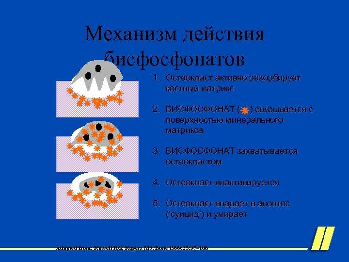 Механизм действия бисфосфонатов 1. Остеокласт активно резорбирует костный матрикс 2. БИСФОСФОНАТ ( ) связывается