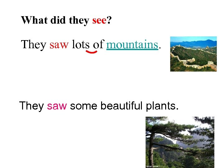What did they see? They saw lots of mountains. They saw some beautiful plants.