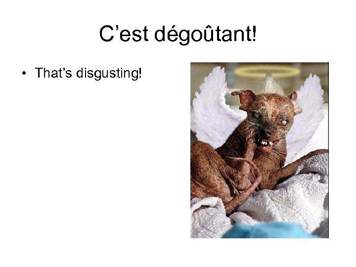 C'est dégoûtant! • That's disgusting!