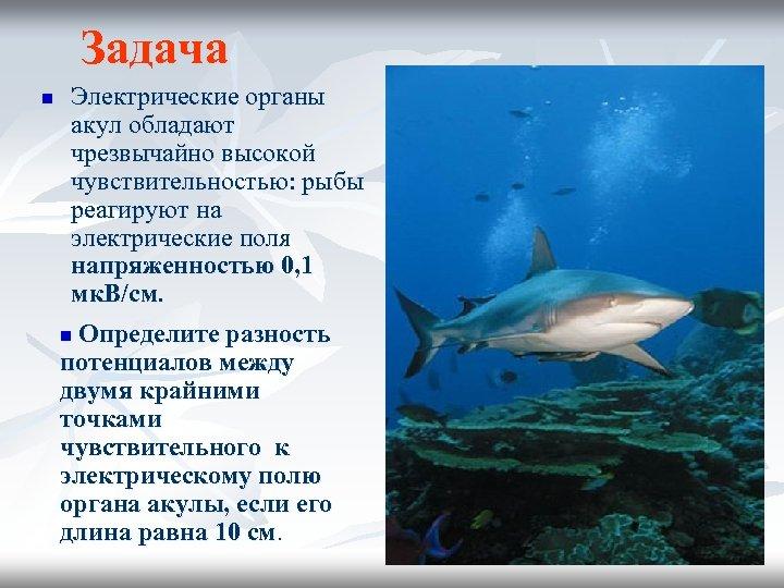 Задача n Электрические органы акул обладают чрезвычайно высокой чувствительностью: рыбы реагируют на электрические поля