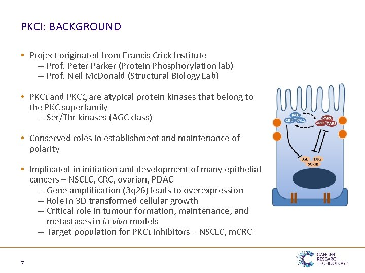 PKCΙ: BACKGROUND • Project originated from Francis Crick Institute – Prof. Peter Parker (Protein