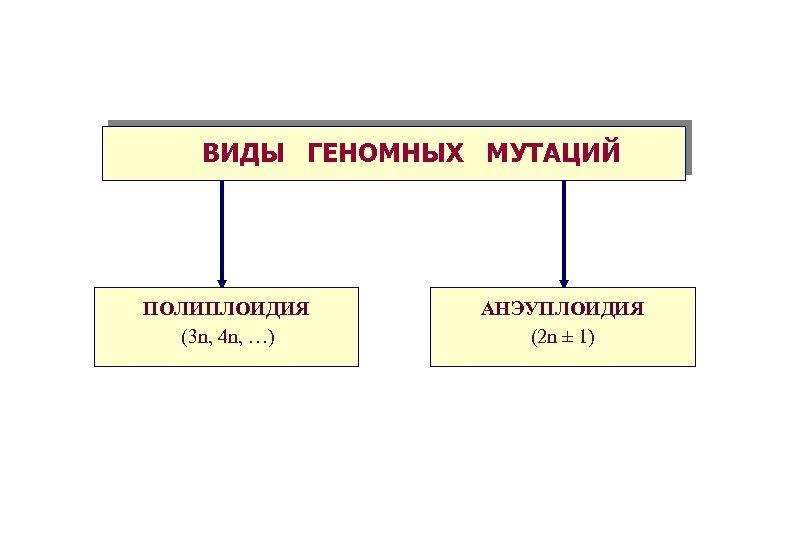 ВИДЫ ГЕНОМНЫХ МУТАЦИЙ ПОЛИПЛОИДИЯ (3 n, 4 n, …) АНЭУПЛОИДИЯ (2 n ± 1)