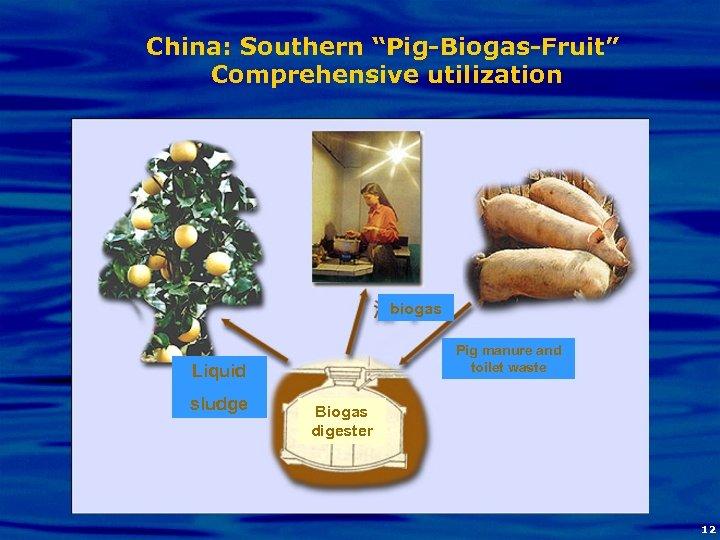 "China: Southern ""Pig-Biogas-Fruit"" Comprehensive utilization biogas Pig manure and toilet waste Liquid sludge Biogas"