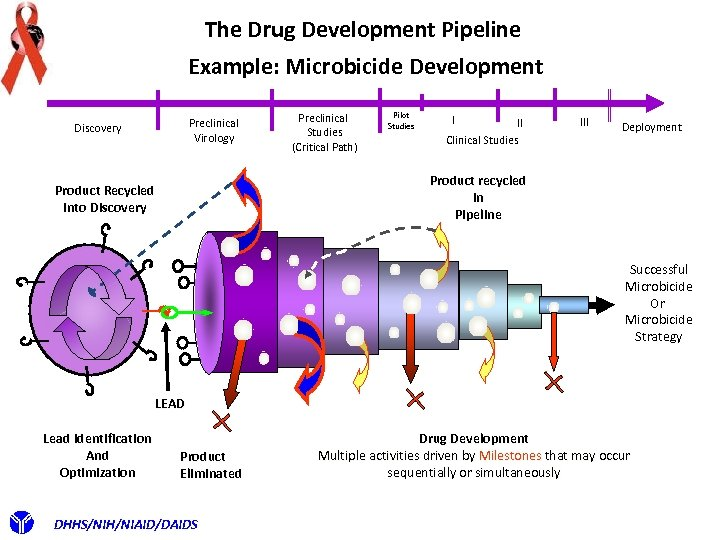 The Drug Development Pipeline Example: Microbicide Development Preclinical Virology Discovery Preclinical Studies (Critical Path)