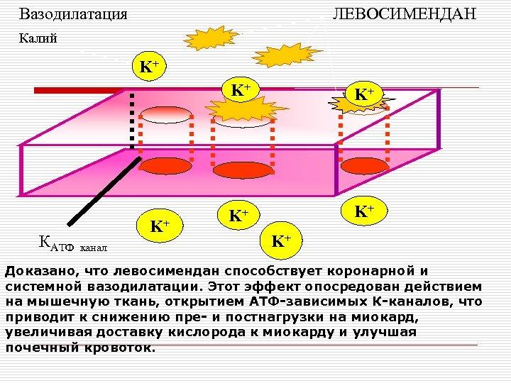 Вазодилатация ЛЕВОСИМЕНДАН Калий K+ K+ КАТФ K+ канал K+ K+ Доказано, что левосимендан способствует
