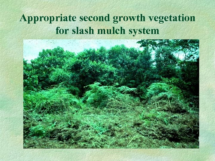 Appropriate second growth vegetation for slash mulch system