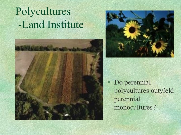 Polycultures -Land Institute § Do perennial polycultures outyield perennial monocultures?