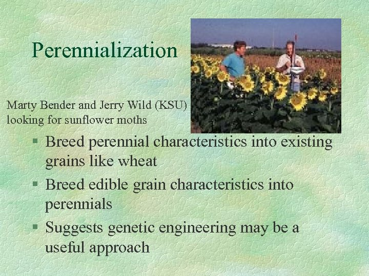Perennialization Marty Bender and Jerry Wild (KSU) looking for sunflower moths § Breed perennial