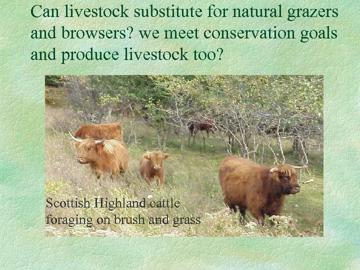 Can livestock substitute for natural grazers and browsers? we meet conservation goals and produce