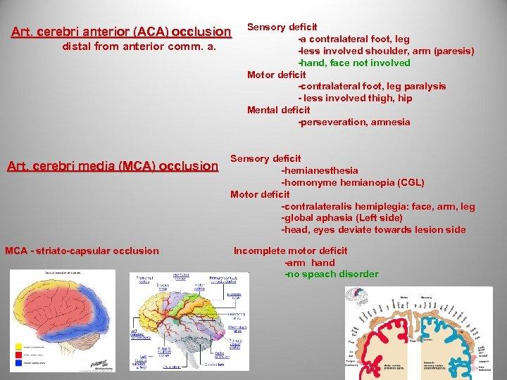 Art. cerebri anterior (ACA) occlusion distal from anterior comm. a. Art. cerebri media (MCA)