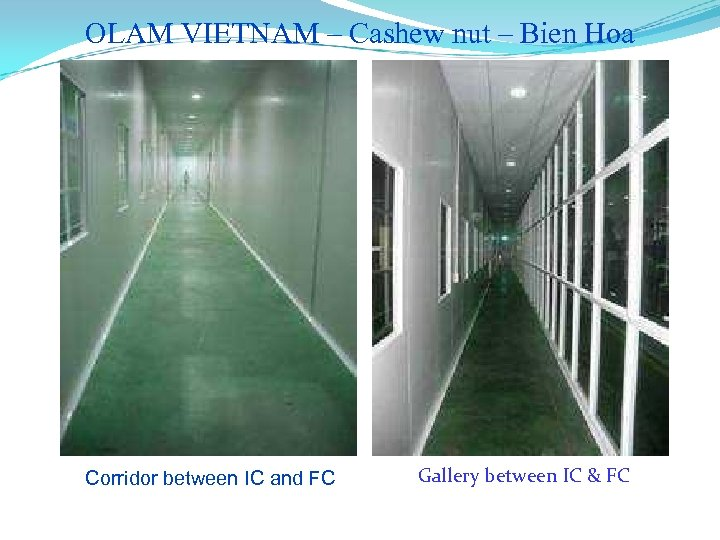 OLAM VIETNAM – Cashew nut – Bien Hoa Corridor between IC and FC Gallery