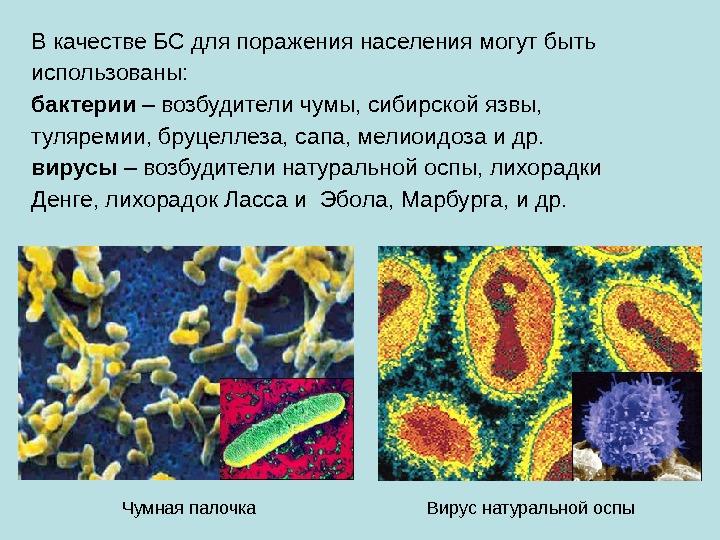 Бактерии являются возбудителями сибирской язвы