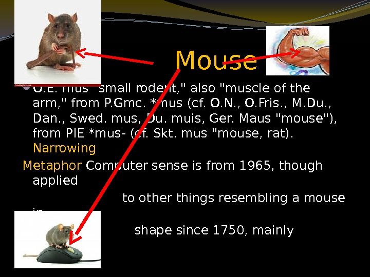 Mouse  O. E. mus small rodent,  also muscle