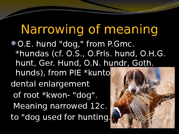 Narrowing of meaning O. E. hund dog,  from P. Gmc.  *hundas (cf.