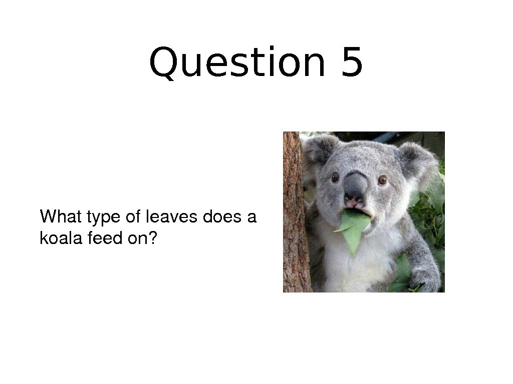 Question 5 Whattypeofleavesdoesa koalafeedon?