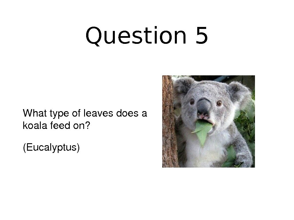 Question 5 Whattypeofleavesdoesa koalafeedon? (Eucalyptus)