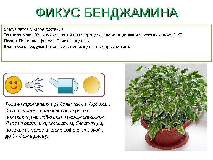 Картинка и описание комнатных растений