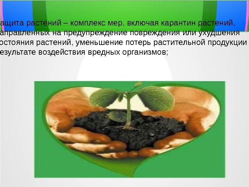 пиксибобов карантин растений в картинках поэтому